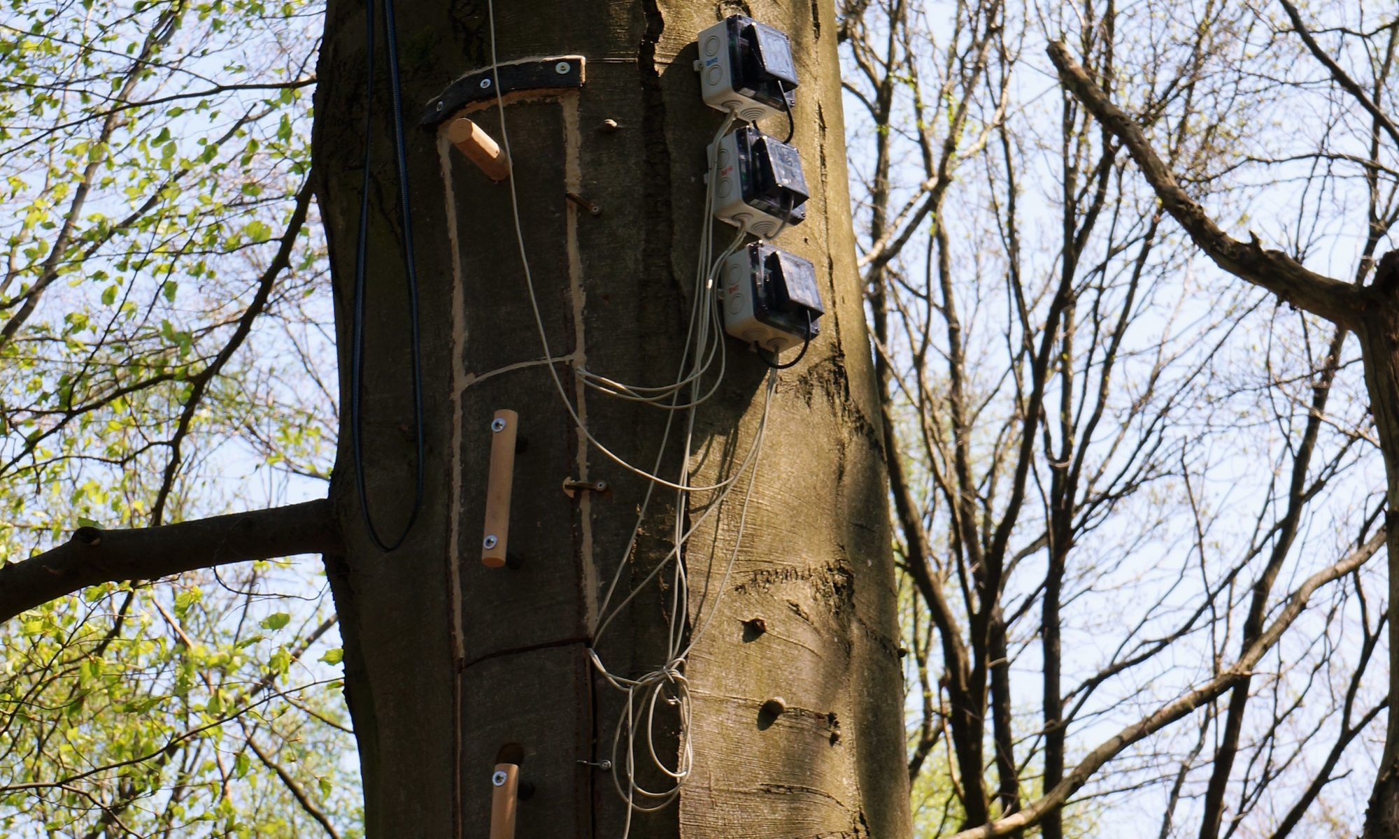 Toms Tree mit Messstationen